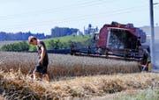 Aktuell wird der Weizen geerntet. Im Bild ein Feld in Steinhausen Bibersee. (Bild Werner Schelbert)