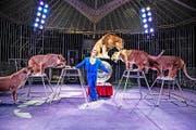 Ziemlich einmalig in der Schweizer Zirkuslandschaft: Dompteur Dominik Gasser junior mit seiner Löwennummer. (Bild: PD)