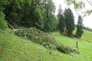 Sturmholzschäden Seewald Zug. (Bild: Amt für Wald und Wild)