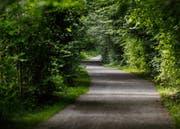 Zwischen den Bäumen ist es im Sommer am Lorzenweg immer angenehm kühl. (Bild Stefan Kaiser)