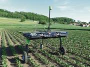 Landwirtschaftsroboter der Firma Ecorobotix: sparsamerer Umgang mit Chemikalien. (Bild: PD)