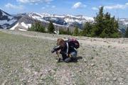 Irgendwo inden Rocky Mountains: Eine Blume gerät Renata Caviglia vor die Linse. (Bild: PD)