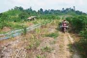 Bild oben: Umweltaktivist Panut Hadisiswoyo fährt an ausgetrockneten Feldern vorbei, die einst Urwald waren. Bild unten: Orang-Utan Leuser bei der Ankunft in der Rettungsstation an einem geheimen Ort ausserhalb von Medan. (Bilder: Urs Wälterlin)
