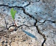 Eine Pflanze braucht das Wachstum zum Überleben. (Bild: Stephan Kaps/Getty)