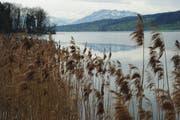 Der Weg um den Baldeggersee soll bis 2016 Realität werden. (Bild: Archiv Neue LZ)