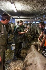 Eine Nutztierärztin bei der Arbeit. (Symbolbild: Keystone/Gaetan Bally (21. November 2012))