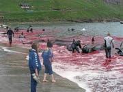 Der blutige Walfang auf den Färöern.