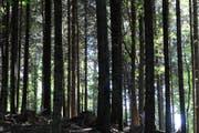 Unter dem Motto «Im Wald türmen sich die Ereignisse» werden im Kanton Zug zahlreiche Veranstaltungen zum Jahr des Waldes organisiert. (Bild: Archiv Neue ZZ)