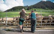 Auf die Landwirte könnte in einigen Jahren erneut eine Reform der Agrarpolitik zukommen. (Bild: Arno Balzarini/Keystone (St. Antönien GR, 12. Juni 2014))