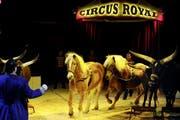 Eine Tiernummer im Zirkus Royal in Emmenbrücke. (Bild: Corinne Glanzmann / Neue LZ)