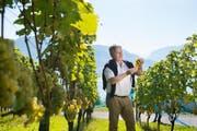 Weinbauer Toni Ottiger bei seinen Rebstöcken auf der Horwer Halbinsel. (Bild: Corinne Glanzmann)
