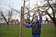 Landwirt Thomas Oehen (42) aus Aesch bei einem seiner Boskop-Hochstammbäume. (Bild: Nadia Schärli / Neue LZ)