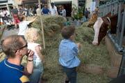 Heu und Kühe auf dem Kornmarkt ziehen Kinder an. Der Kornmarkt ist einer von fünf Standorten von «Luzern muht». (Bild: Nadia Schärli / Neue LZ)