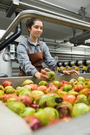 Blick in die neue Mosterei in Sursee: Eine Mitarbeiterin sortiert frische Äpfel. (Bild Eveline Beerkircher)