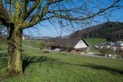 Die Gemeinde Horw will das Land des Bauernhof Grämlis an andere Landwirte auf der Halbinsel aufteilen. (Bild: Boris Bürgisser (Neue LZ) (Neue Luzerner Zeitung))