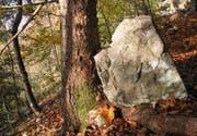Bäume bremsen oder stoppen losgelöste Steine, wie diese Aufnahme aus dem Herdernwald in Ennetbürgen zeigt. (Bild pd)