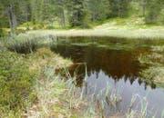 Moorsee mit Schnabelsegge und Torfmoosen. (Bild Lawa)