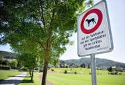 Das neu signalisierte Hundeverbot beim Sportfeld Risch in Ebikon. (Bild Corinne Glanzmann)
