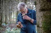 Freut sich über die diesjährige Pilzvielfalt: Peter Brunner, Präsident des Pilzvereins Hochdorf. (Bild: Nadia Schärli (Ballwil, 9. Oktober 2017))