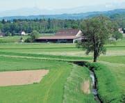 Der Einsatz von Pestiziden in der Landwirtschaft ist umstritten. (Bild: Nana do Carmo (Wigoltingen, 11. Mai 2012))