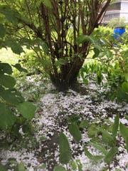 Im Garten unserer Leserbild-Reporterin liegen am Dienstagnachmittag dicke Hagelkörner. (Bild: Leserbild Sandra von Holzen (18. Juli 2017, Engelberg))