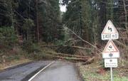 Bäume stürzten auf die Strasse zwischen Ebersecken und Richenthal. (Bild: Leser Fabian Fischer)