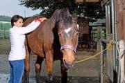 Die 30-jährige Stute Daffi geniesst beim Pferdestall in Sins eine Shiatsu- Stunde mit der Therapeutin Elvira Caratsch. (Bild Maria Schmid)