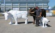 Im Rahmen der Zuger Stierparade werden Stierrohlinge von Kunstschaffenden und Schulklassen gestaltet.