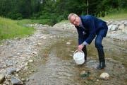 Baudirektor Heinz Tännler eröffnet die neue Hochwassersicherung des renatuierten Littibaches in Baar mit dem Einsetzen von jungen Bachforellen. (Bild: PD)