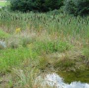 Biotope bereichern die abgeschlossene Deponiefläche (Bild: PD)