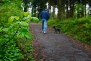 Im Wald ist besondere Vorsicht geboten. (Archivbild Stefan Kaiser/Neue ZZ)