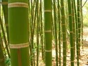 Der zweite Prozess gegen das Ehepaar drehte sich um angebliche Bambusplantagen auf den Phillippinen. (Symbolbild PD)
