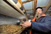 Zurzeit pflegt Anton Brücker aus Spiringen in seiner privaten Igelstation sieben Igel, die alleine im Winter wenig Chancen gehabt hätten. (Bild Urs Hanhart)