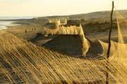 In Ägypten erreichen die Fangnetze an der Küste inzwischen eine Länge von insgesamt 700 Kilometern. (Bild Holger Schulz)