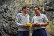 Höhlengewachsen: Alex Lussi (links) mit gelben Austern-Seitlingen (Pleurotus), Markus Stutz mit Shii-Take. Die Pilze sind bereits in der neuen Anlage im Rotzloch gediehen. (Bild: PD)