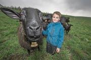 Putzig: Die Schafe von Jonas und Fabian Amrein (Bild: Pius Amrein (Sempach, 27. März 2018))