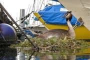 Ein Hubentaucherweibchen auf ihrem Nest. (Bild: Heinz Schürmann)