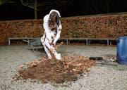 Die Performance «Herkunft» (mit Erde, Laub und Regenwasser) von Claudia Bucher an der Vernissage im Sankturbanhof Sursee. (Bild: Rob Nienburg)