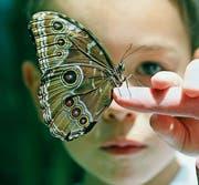 Verletzlich wie ein Schmetterling: Bei der Hautkrankheit Epidermolysis bullosa ist die oberste Schicht wegen eines Gendefekts geschädigt und deshalb überempfindlich. (Bild: Getty)