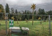 Dieses Grundstück der Bauernfamilie Grüter wird doch nicht zu einem Standplatz für Fahrende. (Bild: Nadia Schärli (Neuenkirch, 8. November 2016))