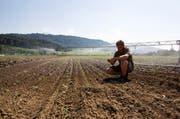 Blumenkohl und Broccoli müssen bewässert werden. Gemüsegärtner Linus Ammann (19) kontrolliert auf einem Feld seines Vaters Josef, ob die Bewässerungsanlage funktioniert. (Bild: Manuela Jans / Neue LZ)