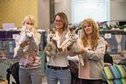 Monika Küttel mit Jennifer und Verena Lüthi (von links nach rechts) von der Zucht «Of Bright House» in Ehrendingen AG. Sie haben an der internationalen Katzenausstellung in der Kategorie «Bester Wurf» den ersten Platz geholt. (Bild: Roger Grütter (Rothenburg, 17. Dezember 2017))