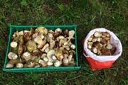 In Schüpfheim wurde ein Pilzsammler angehalten, welcher trotz Schonzeit elf Kilo Steinpilze gesammelt hatte. (Bild Luzerner Polizei)