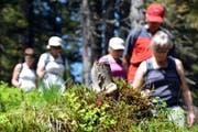 Bergwanderer - insbesondere ältere Personen - sind sich der Gefahren beim Wandern oft nicht oder nur ungenügend bewusst. (Symbolbild) (Bild: Archiv / Markus von Rotz)