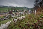 Blick auf die Gemeinde Ebersecken. (Bild: Pius Amrein)