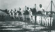 Die Recksektion des Turnvereins Sursee am Turnfest in Arth 1930. (Bild: Turnverein Sursee)