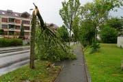 Der Sturm knickte diesen Baum an der Erlenstrasse in Emmenbrücke um. (Bild: Leserbild Thesy Wittwer-Wolf)