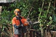Martin Sutter von der Stadtgärtnerei beim Roden von Kirschlorbeerpflanzen an der Taubenhausstrasse. (Bild: pd)