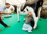 Beim Handmelken merkt man: Milch kommt aus der Kuh, nicht aus dem Tetra Pack.Bild: Stefan Kaiser (Zug, 24. Oktober 2016)