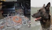 Polizeihund Pango vom Urnerland stoppte in Holzhäusern einen Dieb. Die drei Männer liessen 400 Kilo Kabel mitlaufen. (Bild: Zuger Polizei)